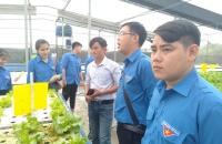Mô hình thanh niên trồng rau thủy canh tại xã Xuân Thới Thượng